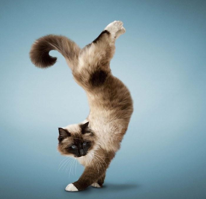 Cat-yoga-12