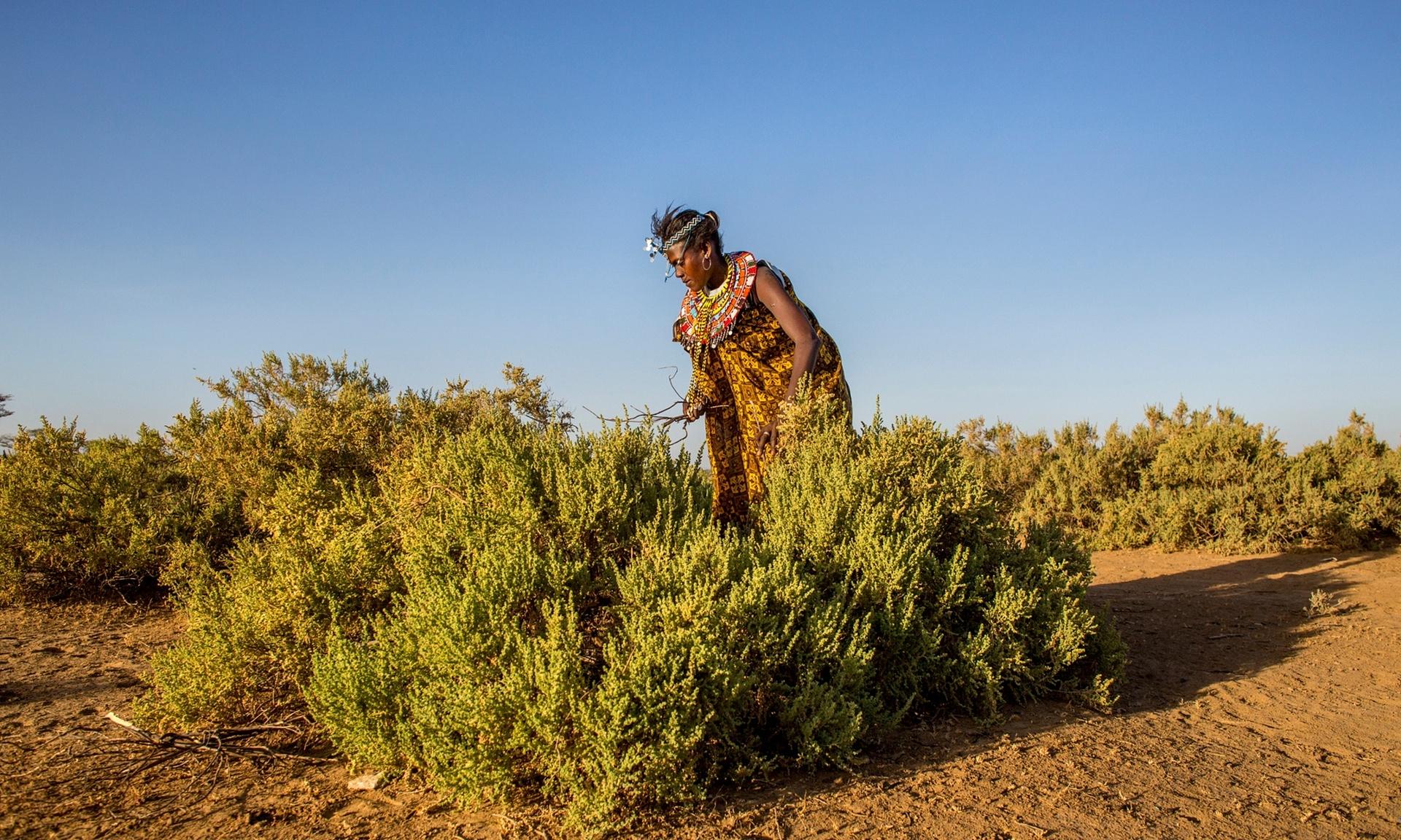 Femeia care cauta omul Kenya