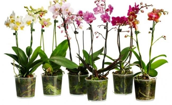 Cum poți transforma o singură orhidee, într-o sută de ghivece de flori?