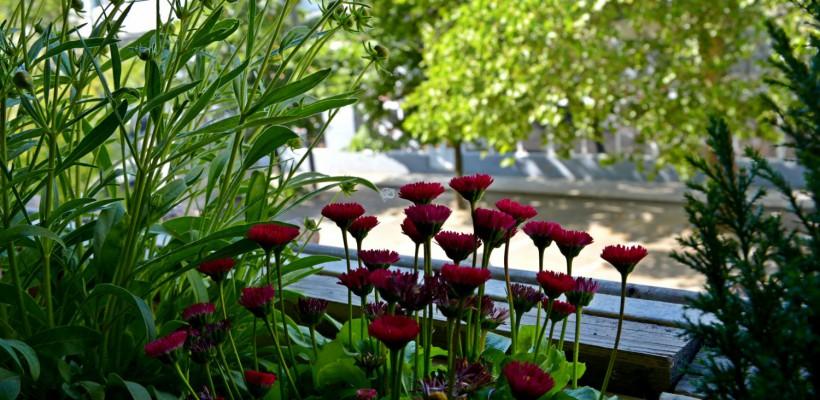 Nasa recomandă: 18 plante de cameră care purifică aerul