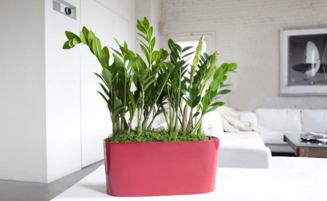 9 plante de cameră care nu necesită multă îngrijire și apă
