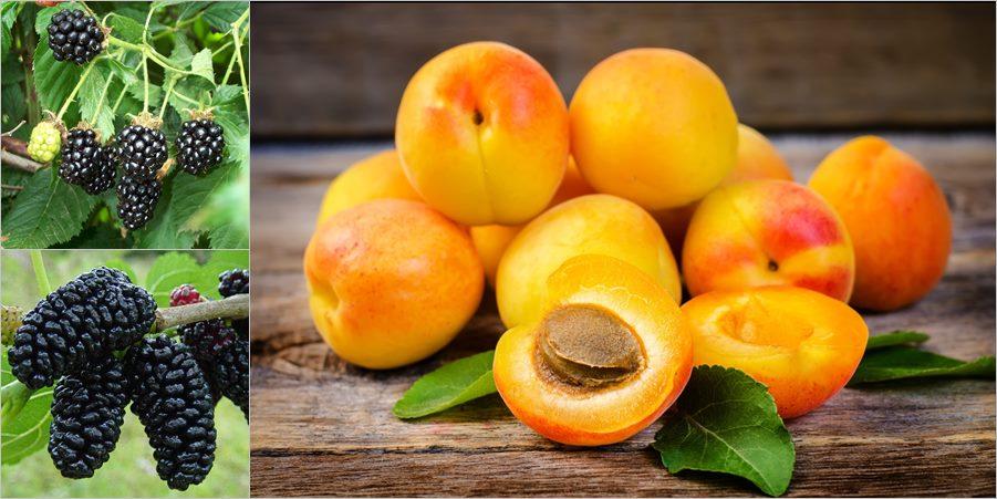 fructe bogate in proteine
