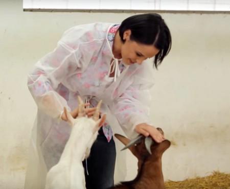 """Andreea Marin a descoperit beneficiile laptelui de capră: """"E, în același timp, delicios și sănătos!"""""""