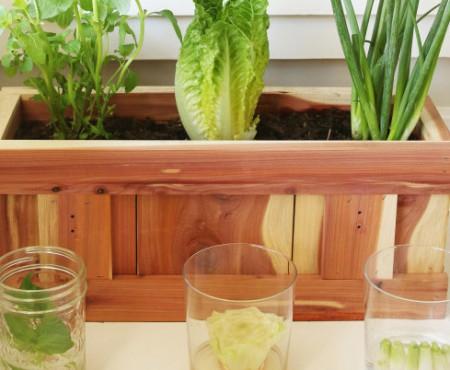 Plantarea legumelor în 3 pași simpli! Fă-o chiar la tine acasă