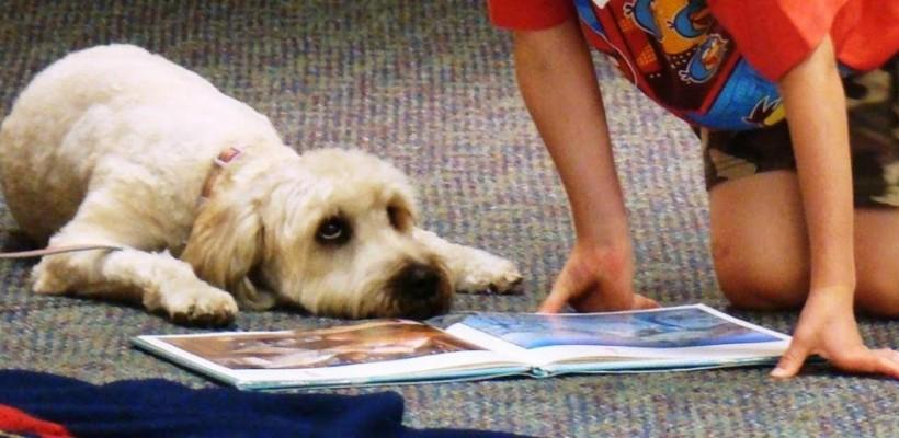 Ia-ți un câine pentru a-ți trata copilul. Ce rase de câini sunt folosite în tratamentul diferitor tulburări