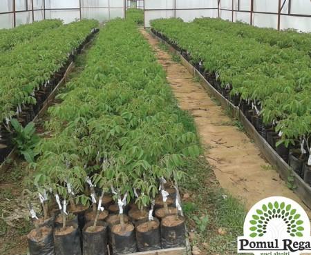 Află cum îți poți dezvolta plantația de nuci la Moldagrotech