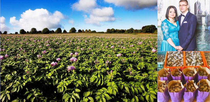 Cum a reușit un cuplu să cultive la Cimișlia prima recoltă de cartofi mov din Republica Moldova