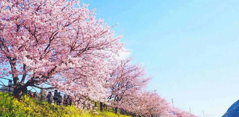 """Primăvara a sosit! Doar că în Japonia. Vezi cum arată un oraș """"inundat"""" de florile de cireș"""
