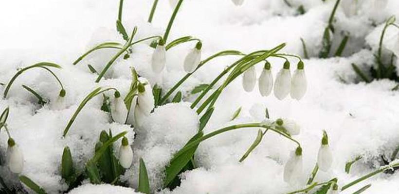 Ați chemat primăvara? Meteorologii anunță temperaturi de până la 20 grade
