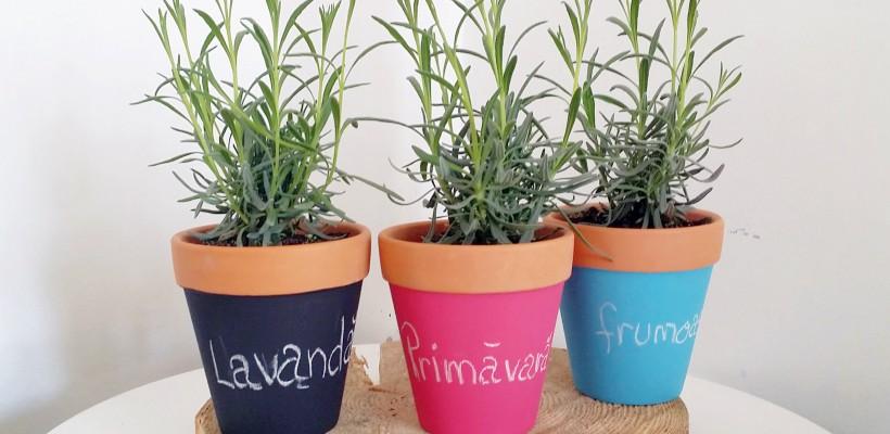 Cum alegem corect ghiveciul potrivit pentru planta preferată?