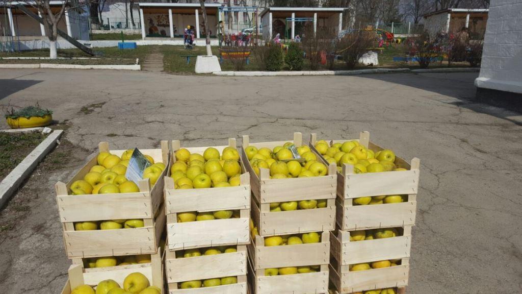 distribuite fructe (5)