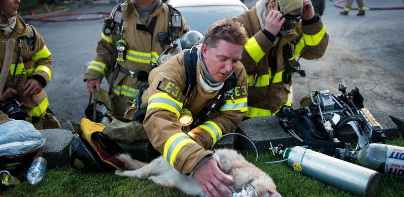 Vezi dovada că pompierii sunt adevărați eroi! (VIDEO)