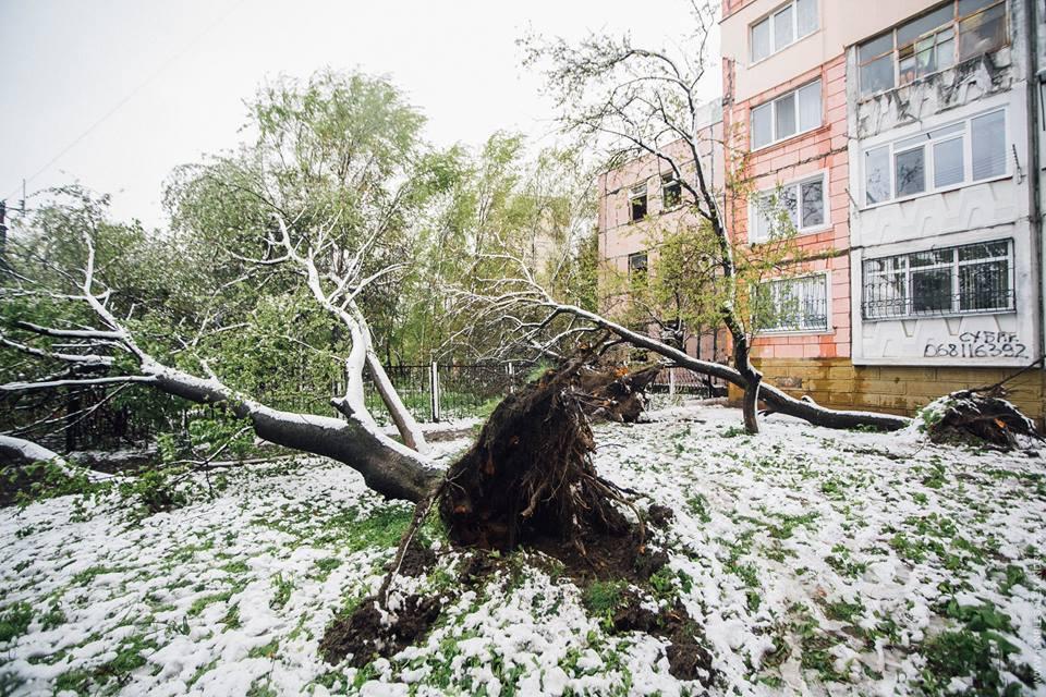 """Fotograful Ion Pleș Alexandru: """"M-am trezit de la trosnetul copacilor. Am luat aparatul și am ieșit"""""""