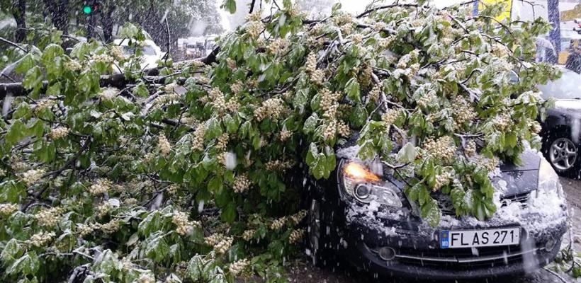 Vremea face prăpăd în capitală! Mașinile și pietonii sunt în pericol din cauza copacilor care se rup (FOTO)