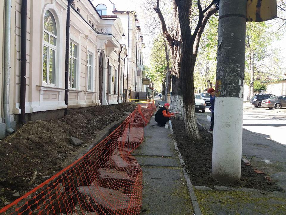 Văruirea copacilor: a fi sau a nu fi? Chișinăuienii sigur vor să înțeleagă necesitatea văruirii copacilor!