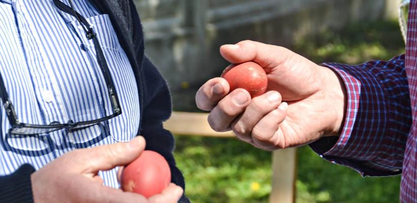 Ouăle fierte trebuie mâncate în cel mult cinci zile, altfel dăunează sănătății!