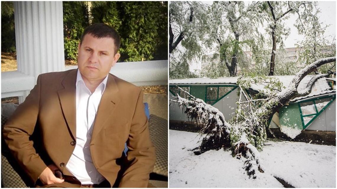 De ce se prăbușesc arborii sănătoși, unii chiar tineri, acum când ninge? Explicația specialistului