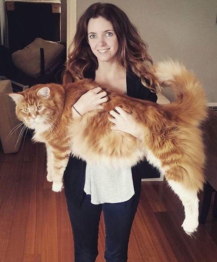 longest-cat-world-omar-australia-3-591c47822a549__700