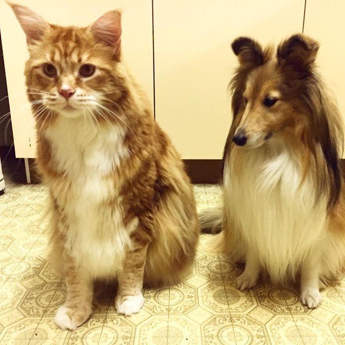longest-cat-world-omar-australia-4-591c478430cf7__700