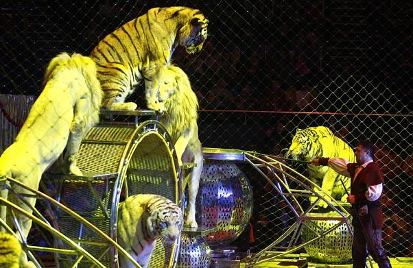 În circurile din România este interzisă folosirea animalelor sălbatice