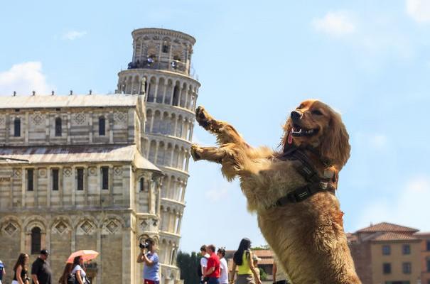 Haz de necaz! Vedeți cele mai haioase imagini cu Turnul din Pisa, surprinse de turiști