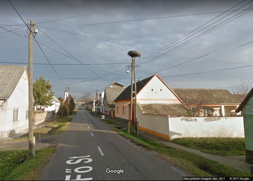 Foto 4. Cuibul părintesc din localitatea Szeremle, județul Bács-Kiskun, Ungaria