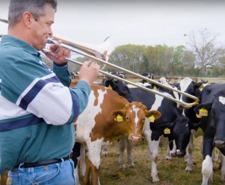 6800 de vaci iubesc jazz-ul și ascultă cu mare plăcere cum le cântă stăpânul la trombon