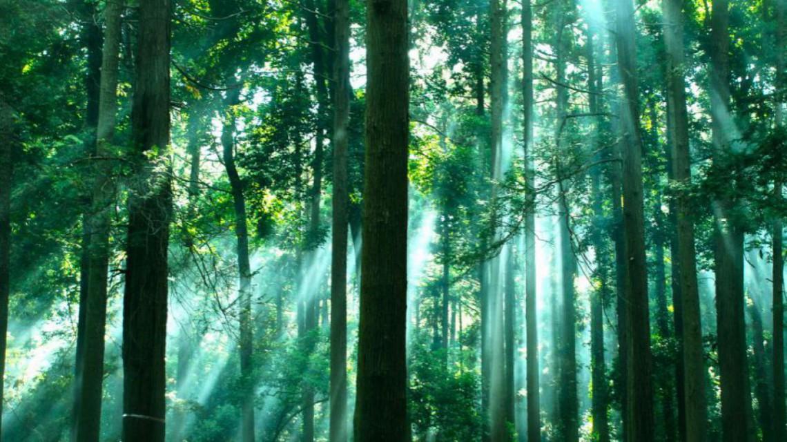 Un grup de entuziaști își propune să planteze un milion de arbori în R. Moldova