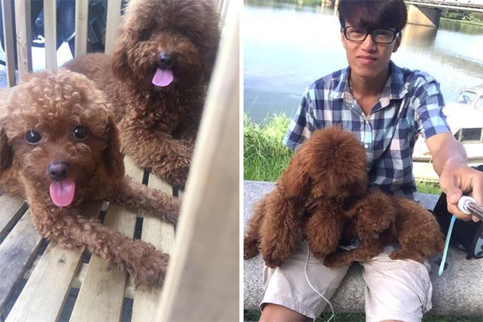 man-makes-dog-backpack-tran-teddy-vietnam-12-599ac9bf6ca53__700