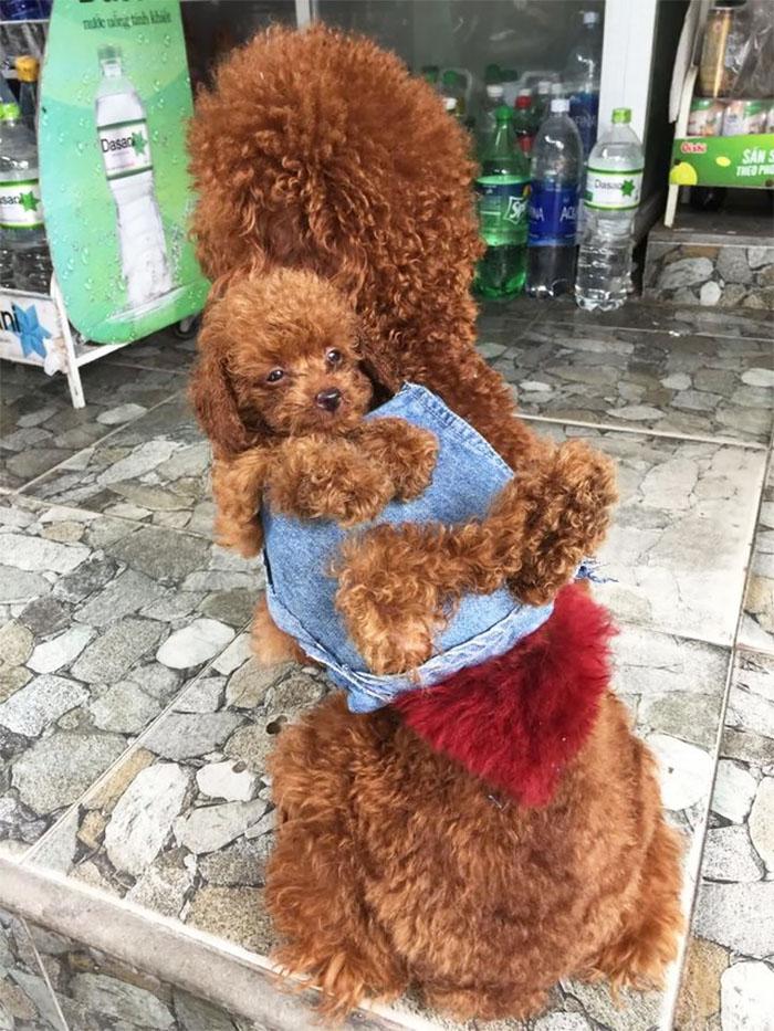 man-makes-dog-backpack-tran-teddy-vietnam-7-599ac9497a5bd__700