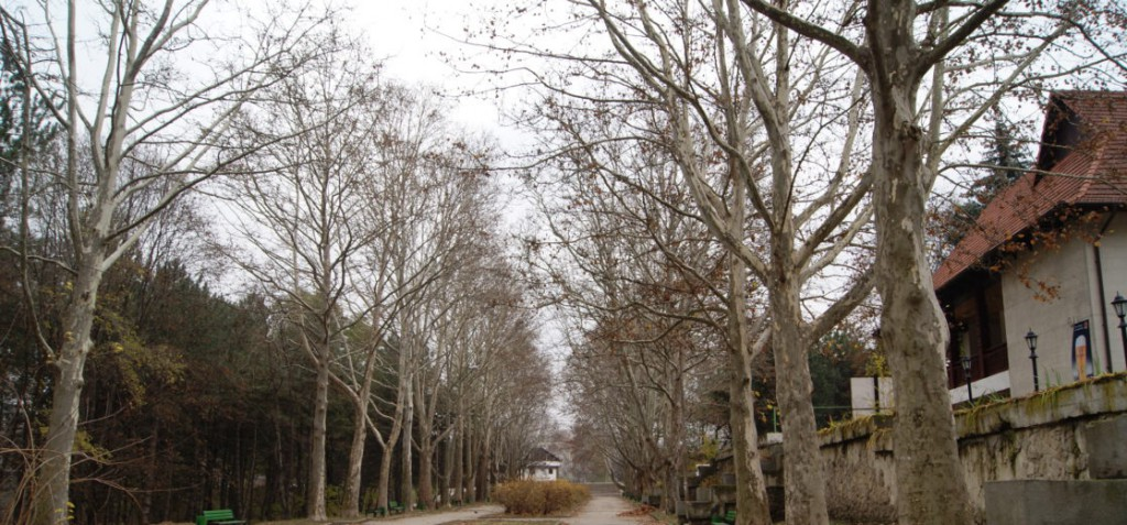 Aleea centrală, Parcul Valea Trandafirilor