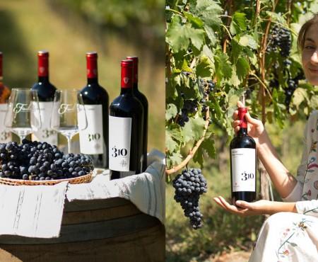 """""""Fautor Winery"""" lansează noua serie de vinuri – 310 Altitudine (VIDEO)"""