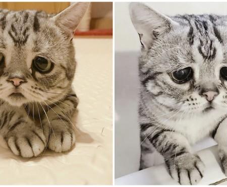 Cunoaște-o pe Luhu – cea mai tristă pisică din lume