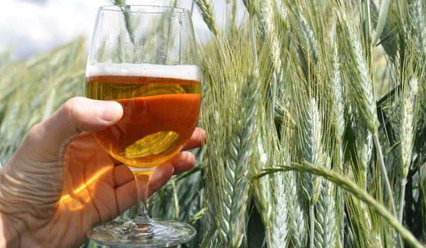 Fermentarea cerealelor, din care a rezultat berea, a fost doar un accident fericit!