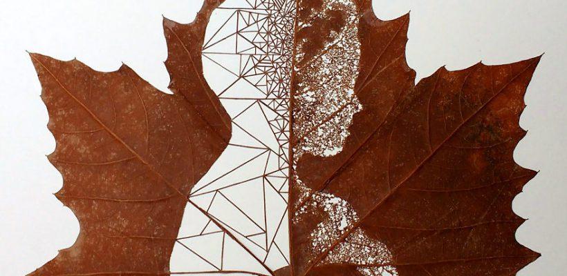 Frunzele devin în mâinile lui tablouri și portrete (Foto)